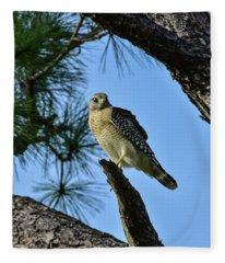 Hawk Watching Intently Fleece Blanket