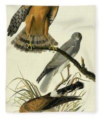 Hen Harrier, Circus Cyaneus By Audubon Fleece Blanket