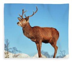 Highland Red Deer Stag Fleece Blanket