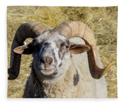 Hog Island Sheep 1 Fleece Blanket
