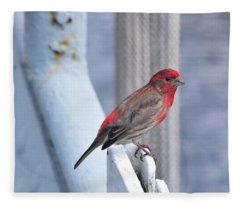 House Finch On The U.s.s. Wisconsin Fleece Blanket