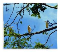 Ibis Perch Fleece Blanket