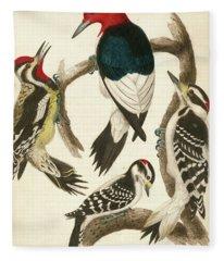 1. Red-headed Woodpecker. 2. Yellow-bellied Woodpecker. 3. Hairy Woodpecker. 4. Downy Woodpecker. Fleece Blanket