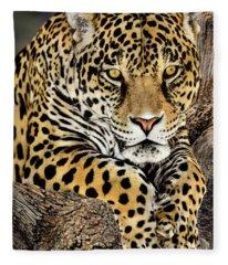 Jaguar Portrait Wildlife Rescue Fleece Blanket