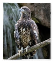 Juvenile Bald Eagle Fleece Blanket