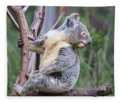 Koala In Tree Fleece Blanket