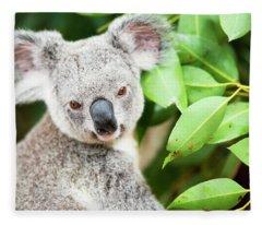 Koala Fleece Blanket