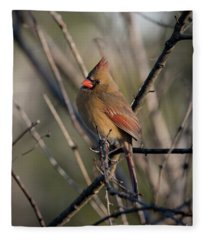 Lady Cardinal Fleece Blanket