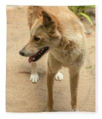 Large Australian Dingo Outside Fleece Blanket