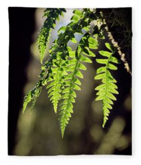 Fleece Blanket featuring the photograph Licorice Fern by Whitney Goodey