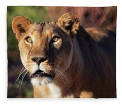 Lioness Looking Up Fleece Blanket