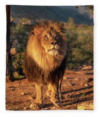 Male African Lion In Early Light Fleece Blanket