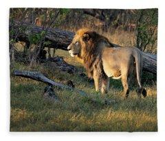 Male Lion In Botswana Fleece Blanket