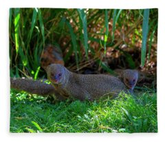Mongoose Pair Fleece Blanket