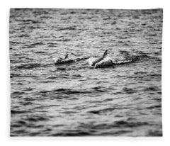 Mother Dolphin And Calf Swimming In Moreton Bay. Black And White Fleece Blanket