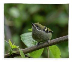Moustached Tinkerbird Fleece Blanket