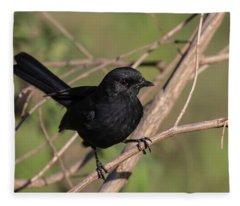 Northern Black Flycatcher Fleece Blanket
