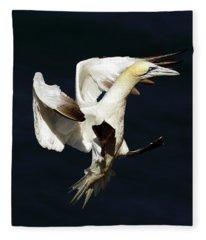 Northern Gannet - Square Crop Fleece Blanket