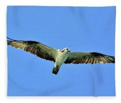 Osprey In Full Glide Fleece Blanket