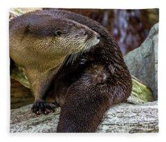 Otter Interrupted Fleece Blanket