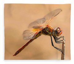 Painted Dragonfly Isolated Against Ecru Fleece Blanket