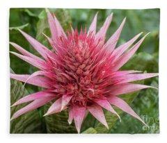 Pink Cone Star Fleece Blanket