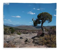 Pinyon Pine With North Rim In Background Black Canyon Of The Gunnison Fleece Blanket