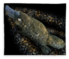 Platypus At Night Fleece Blanket