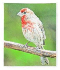Purple Finch, Animal Portrait Fleece Blanket