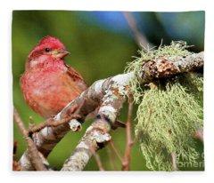 Purple Finch Fleece Blanket