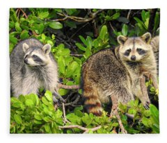 Raccoons In The Mangroves Fleece Blanket