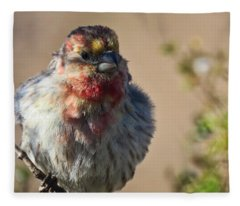 Fleece Blanket featuring the photograph Rare Multicolored Male House Finch by Judy Kennedy