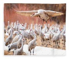 Ready Or Not, Here I Come -- Sandhill Cranes Fleece Blanket