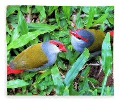 Red-browed Finch Pair Fleece Blanket