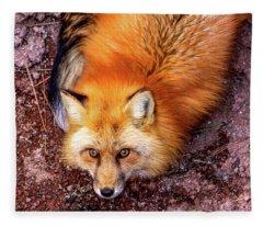 Red Fox In Canyon, Arizona Fleece Blanket