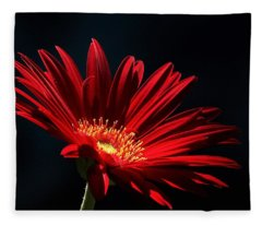 Red Gerber Daisy In Spotlight Fleece Blanket