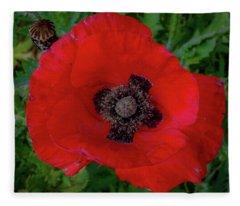Red Poppy Fleece Blanket