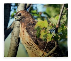 Red-tailed Hawk Looking Down From Tree Fleece Blanket
