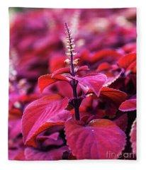 Reds Fleece Blanket