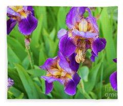 Royal Purple Irise Fleece Blanket