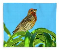 Singing House Finch Fleece Blanket