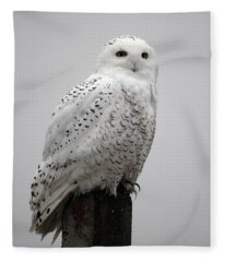 Snowy Owl In Fog Fleece Blanket