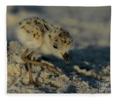 Snowy Plover On The Hunt Fleece Blanket