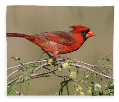 South Texas Cardinal Fleece Blanket