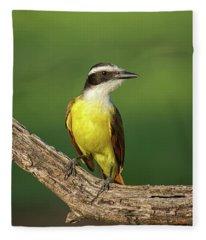 South Texas Great Kiskadee Fleece Blanket