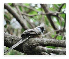 Speckled Mousebird  Fleece Blanket
