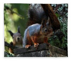 Squirrels Fleece Blanket