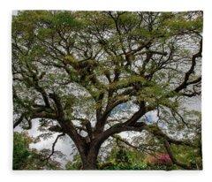 St. Kitts Saman Tree Fleece Blanket