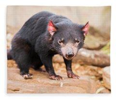 Tasmanian Devil In Hobart, Tasmania Fleece Blanket