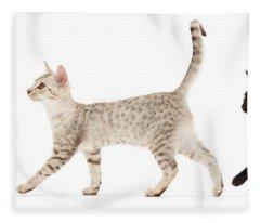 The Kits Parade - Three Fleece Blanket